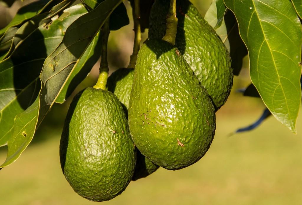 hass-avocado-945418_1280